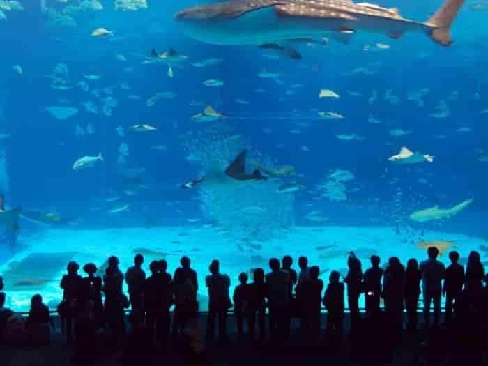 آکواریوم استانبول Aquarium Istanbul