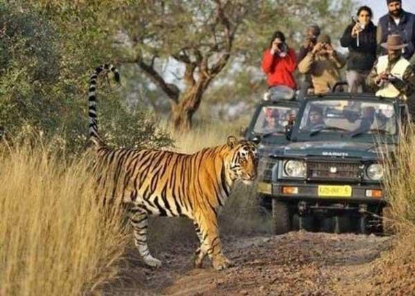 راهنمایی سفر به هند