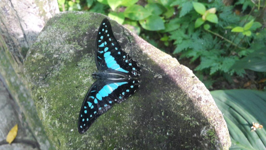 پارک پروانه مالزی