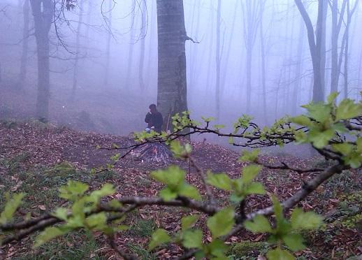 جنگل پاسند مازندران