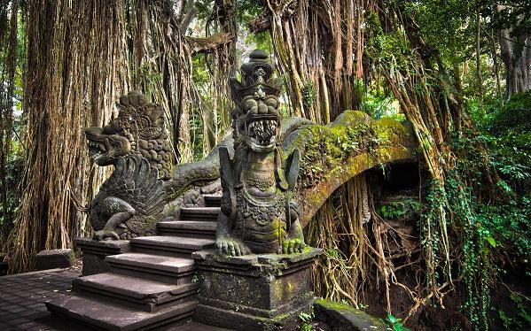 جنگل میمون اوبود بالی