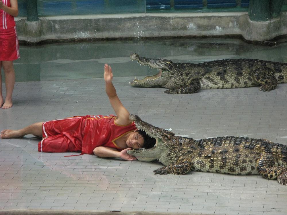 بازی و شو کروکدیل ها در پارک سنگی پاتایا