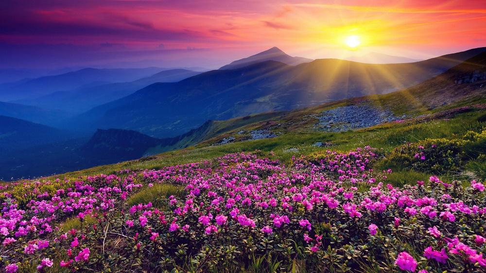 دره گلها هند