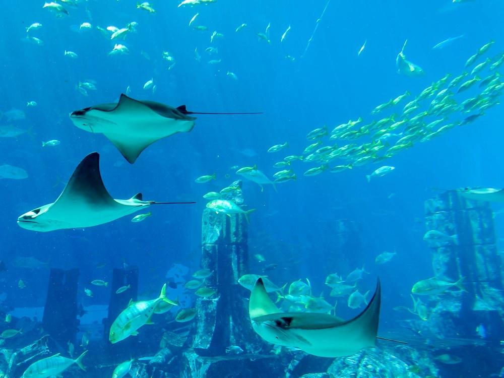 غذا دادن به موجودات دریایی آکواریوم لاست چمبرز دبی