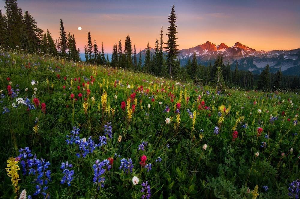 دره گل ها در ارمنستان