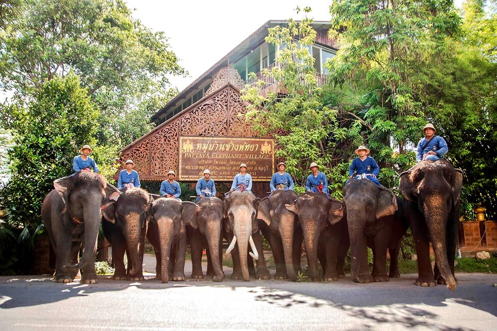 فیل سواری پاتایا تایلند
