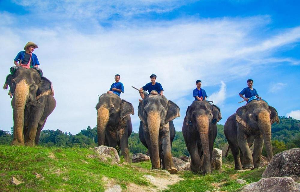 فیل سواری در پوکت تایلند