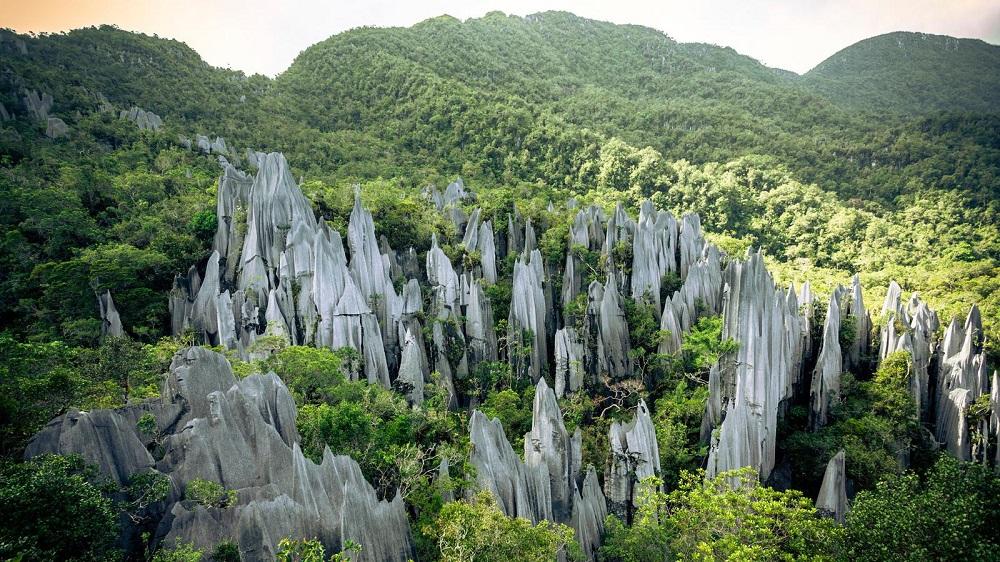 پوشش گیاهی و جانوری و آب و هوای جزیره بورنئو