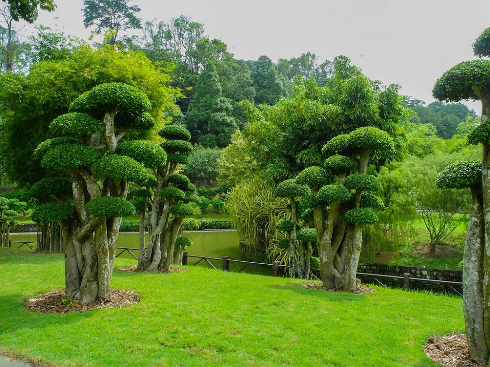 پوشش گیاهی و جانوران باغ بوتانیکال پردانا کوالالامپور