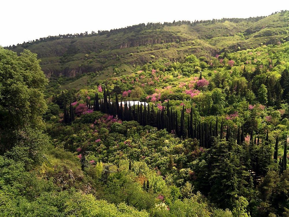 باغ بوتانیکال تفلیس