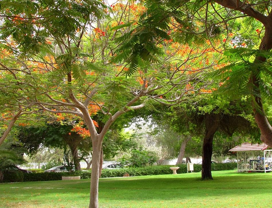 فضای سبز باغ پرندگان کیش