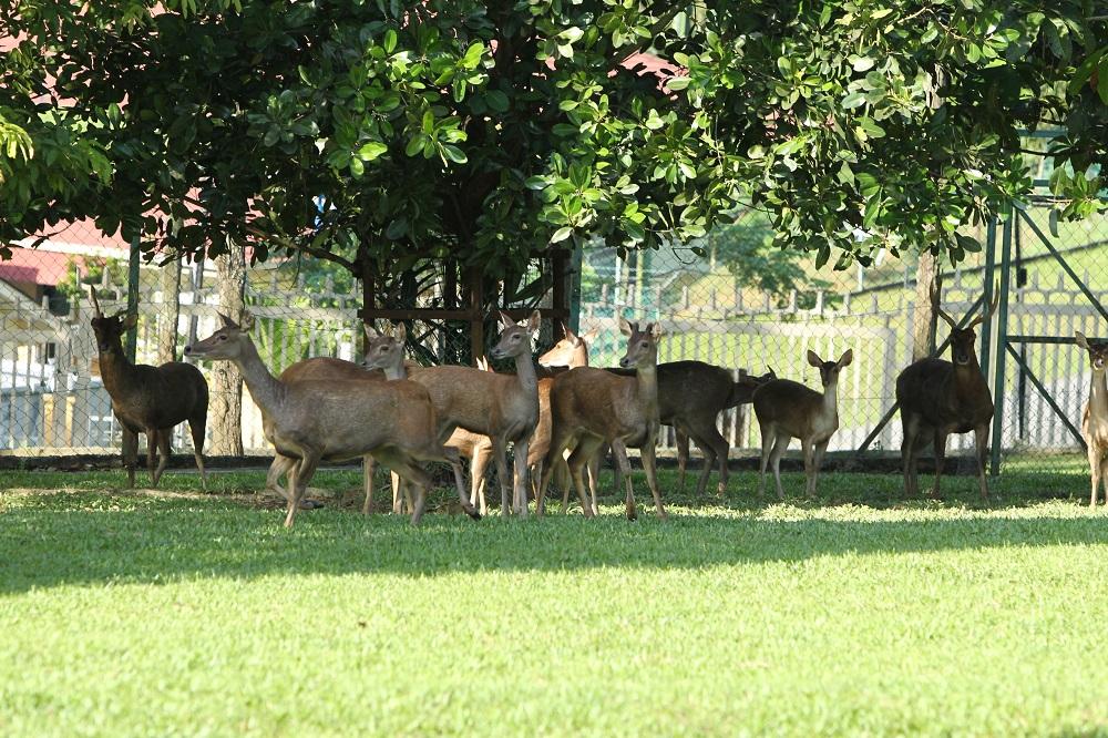 پارک آهو کوالالامپور