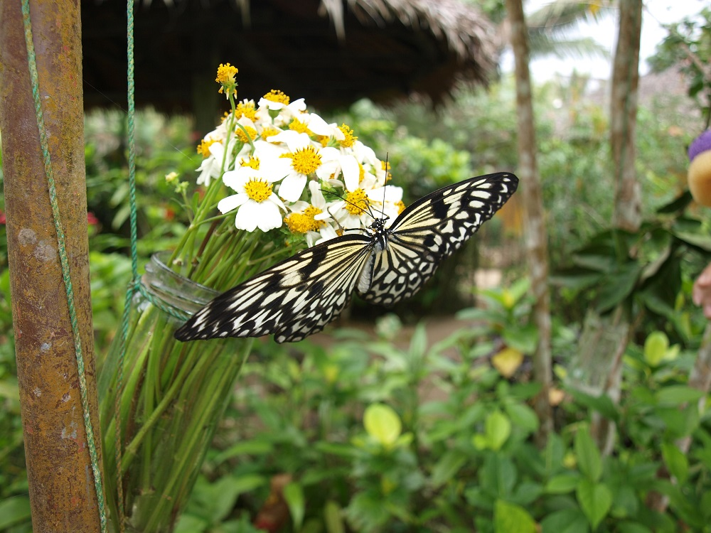 مزرعه پروانه در استانبول
