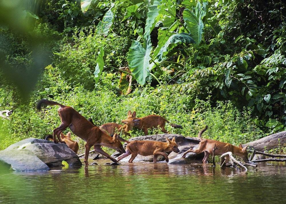 پارک ملی خائو یای تایلند