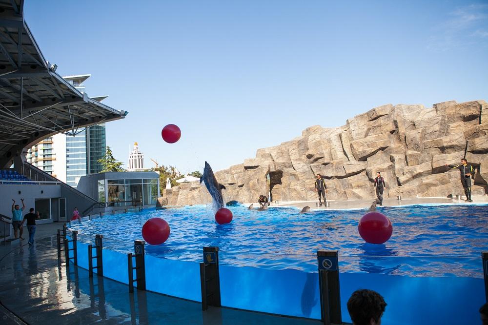 تجربه شنا در کنار دلفین ها در دلفیناریوم باتومی