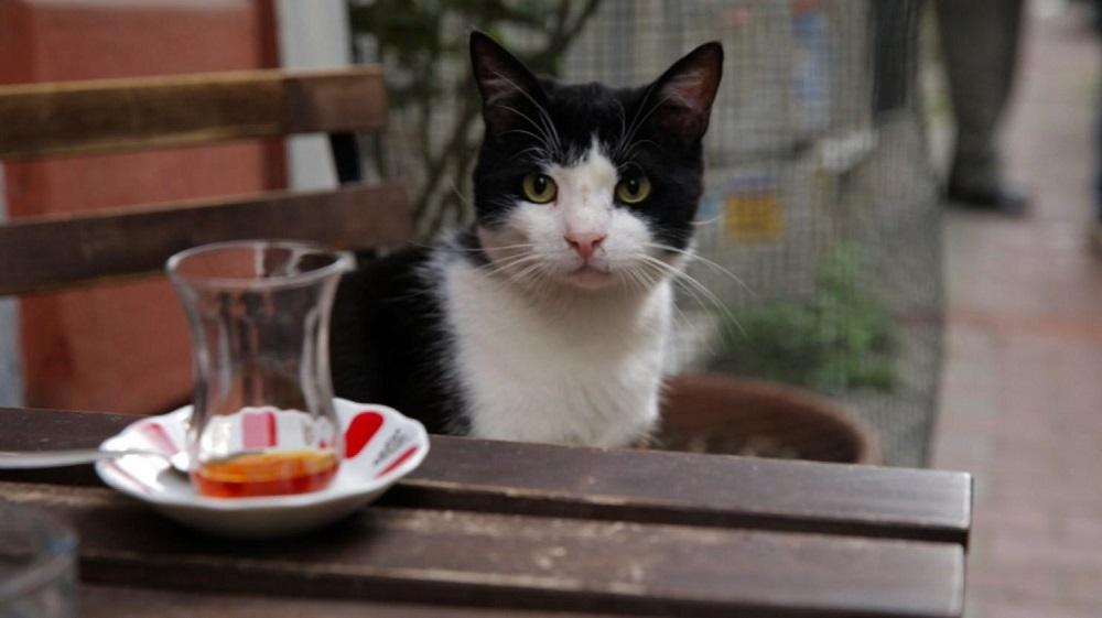 گربه های استانبولی