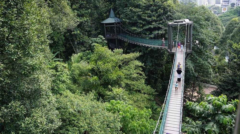 پارک جنگلی در شهر کوالالامپور