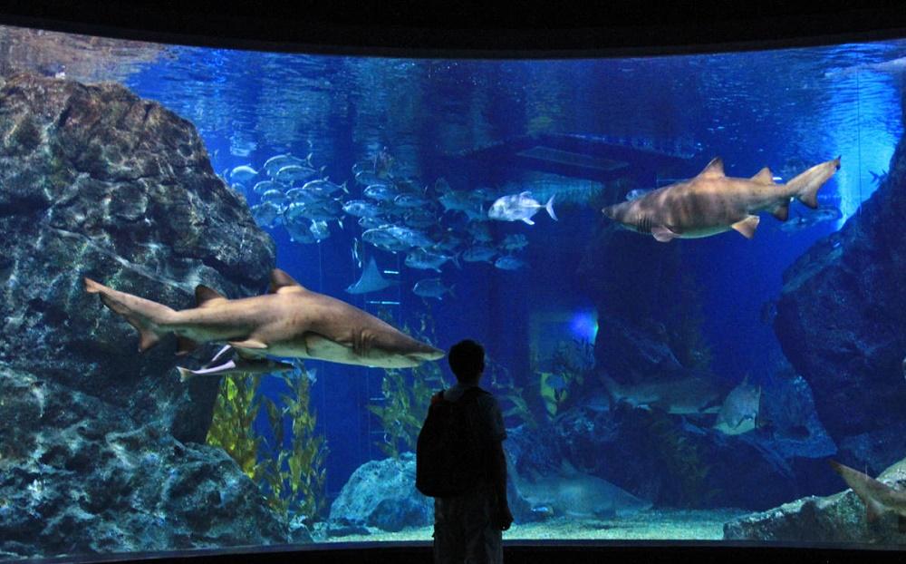 اقیانوس گرمسیری و لاشه کشتی کوسه