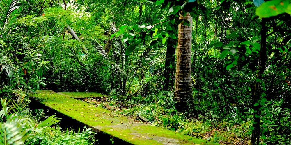 جنگل باران خیز استوایی