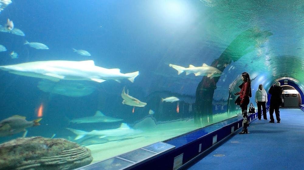 موجودات آبزی و ماهیان این آکواریوم