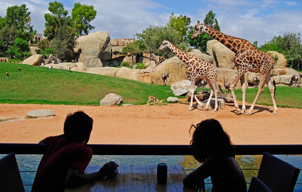 غذا دادن به حیوانات در باغ وحش بیو پارک والنسیا