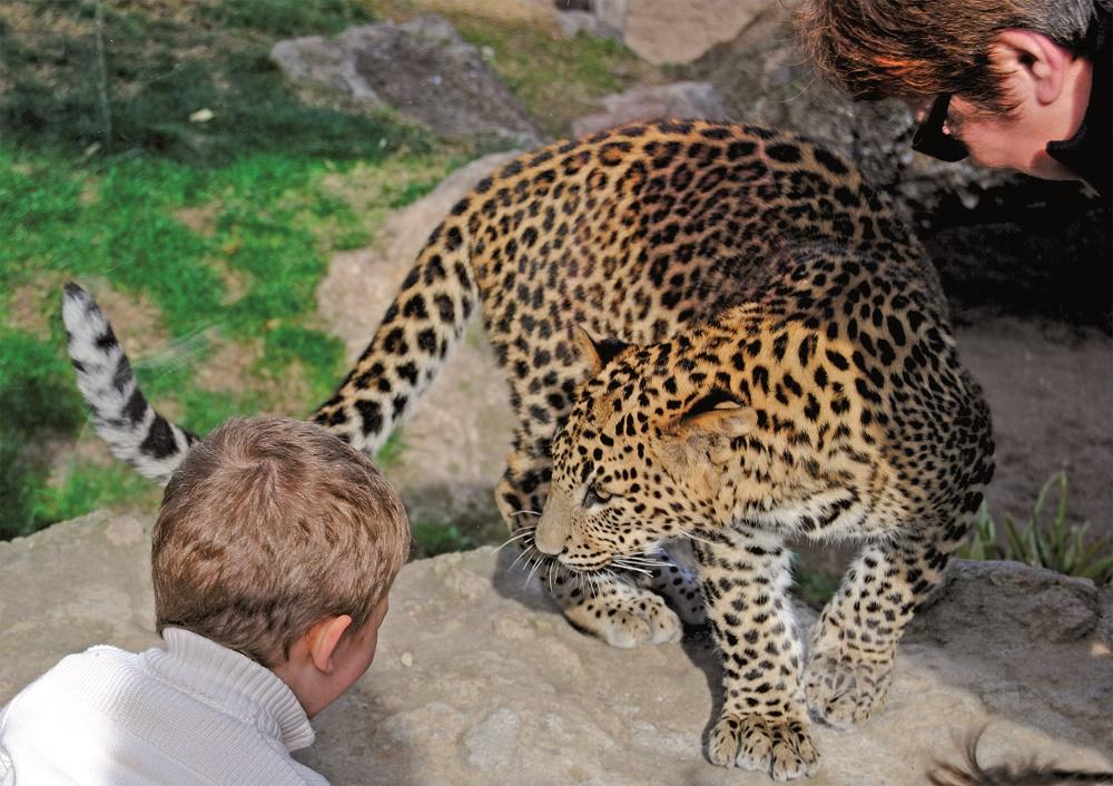 امنیت در باغ وحش آزاد بیو پارک والنسیا