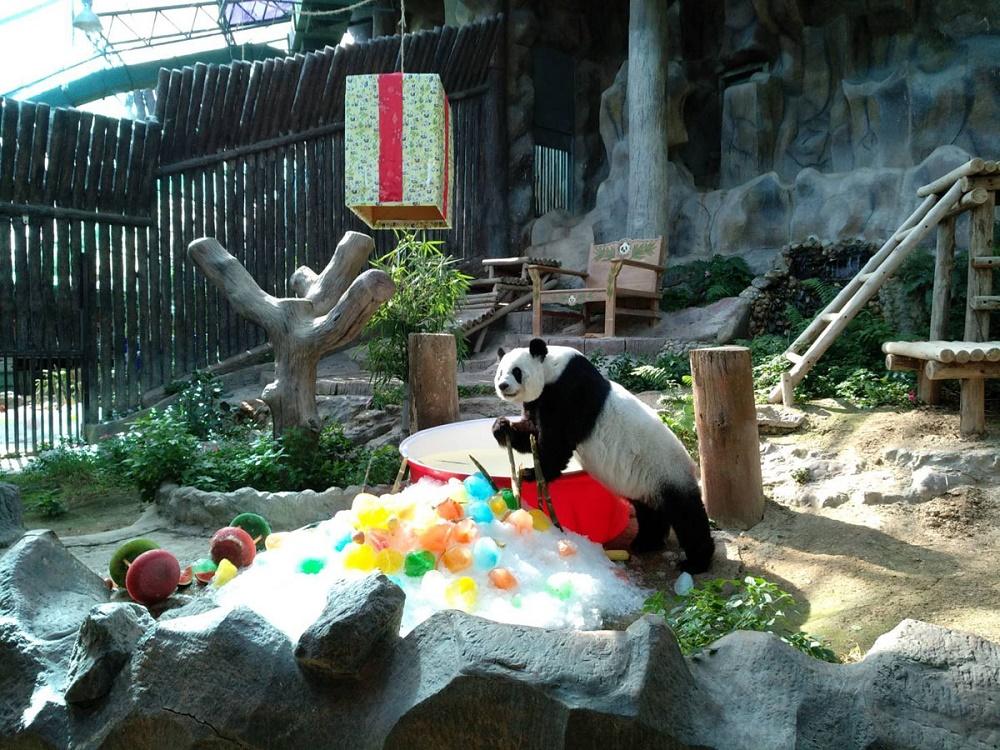 حیوانات باغ وحش چیانگ مای