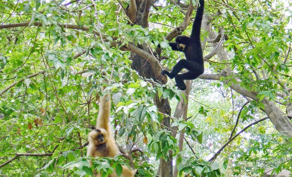حیواناتی که در جنگل گیبون زندگی می کنند