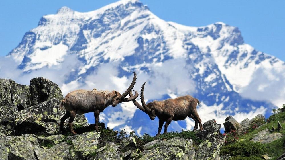 گونه های جانوری پارک ملی گرن پارادایز